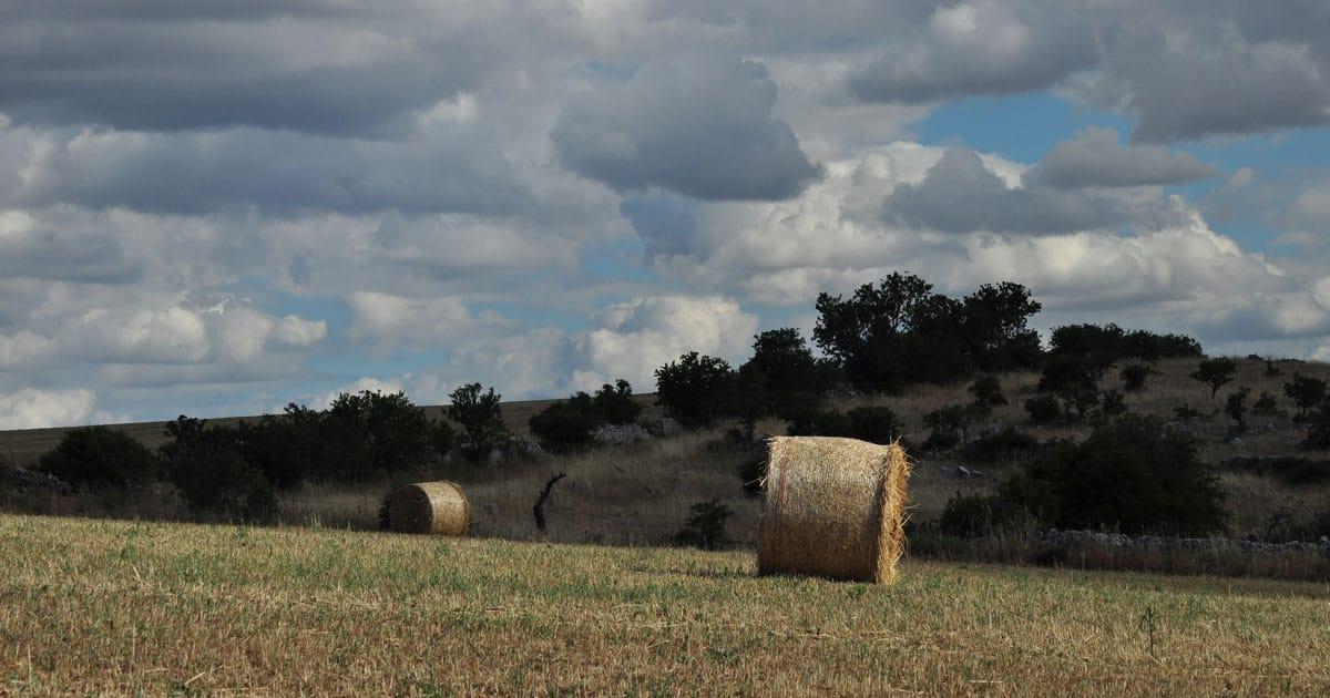 parco nazionale dell alta murgia campo