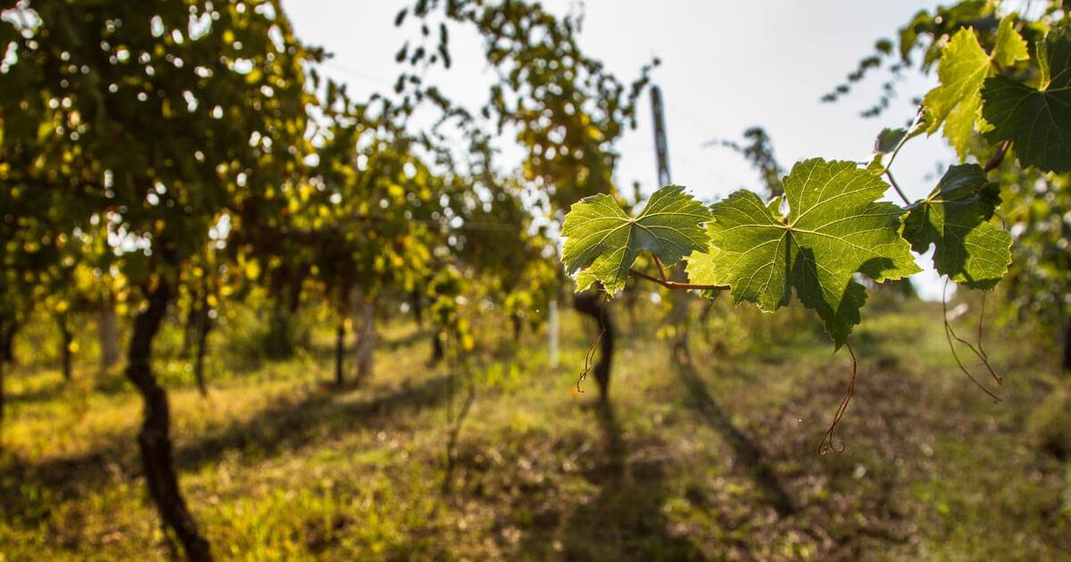 Riconoscimenti vini pugliesi