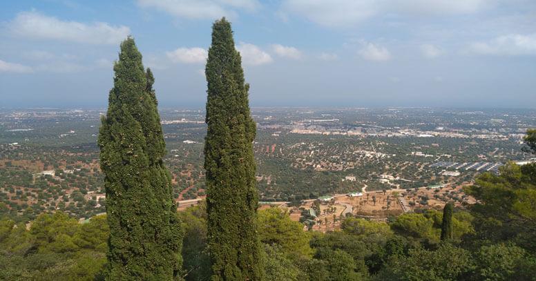 Panorama selva di fasano