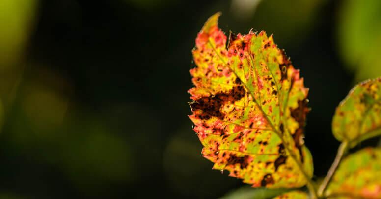 foliage autunno puglia