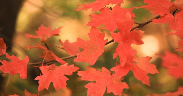foliage dove in puglia