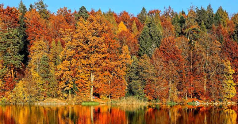 foreste in puglia