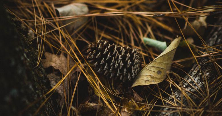 boschi in puglia