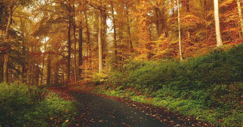 foliage puglia