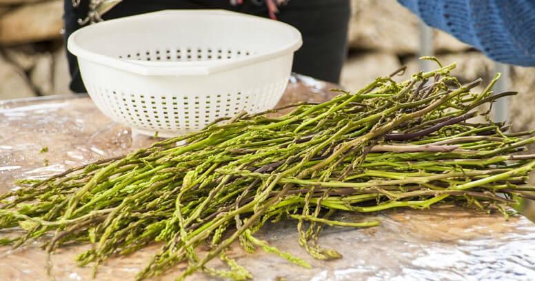 sagra dell'asparago selvatico