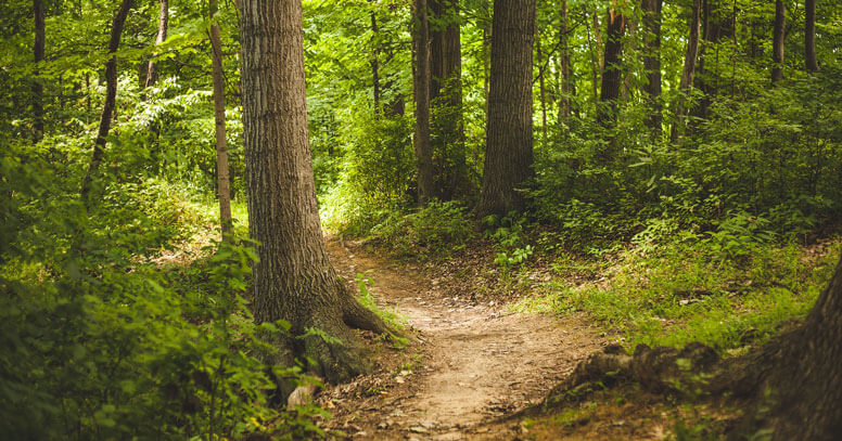 foreste pugliesi