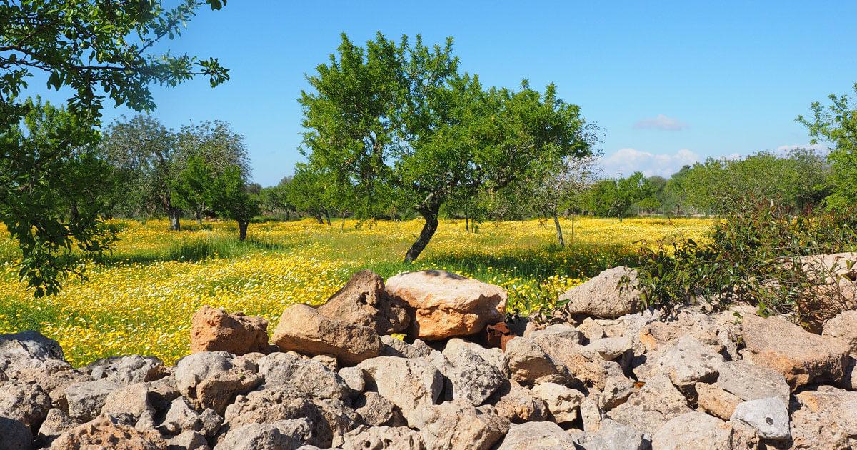 5 cose da fare in primavera in Puglia