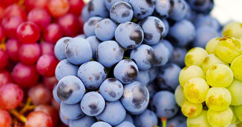uva di rutigliano